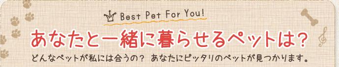 あなたと一緒に暮らせるペットは? どんなペットが私には合うの?あなたにピッタリのペットが見つかります。