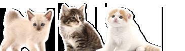 bg_cat.png
