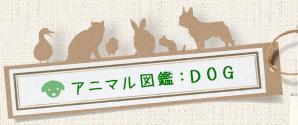 アニマル図鑑:DOG