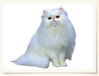zukan_cat_bodytype_img01.jpg
