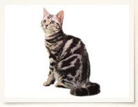 zukan_cat_bodytype_img02.jpg