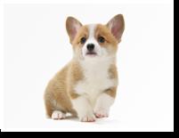 zukan_dog_10groups_img01.png