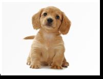 zukan_dog_10groups_img04.png