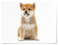 zukan_dog_10groups_img05.png