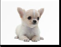 zukan_dog_10groups_img09.png
