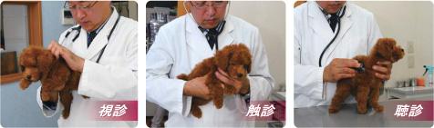 専属獣医師による健康診断を一頭一頭実施しています。