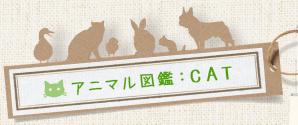 アニマル図鑑:CAT