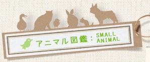 アニマル図鑑:SMALL ANIMAL