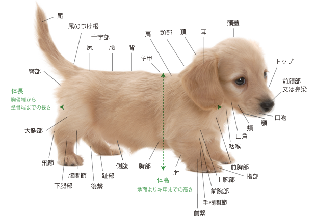 zukan_dog_body_img01.png