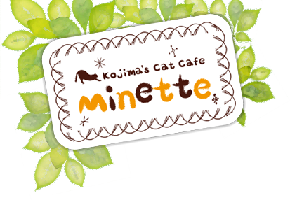 KOJIMA's Cat Cafe